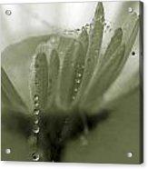 Flower And Drops Acrylic Print by Odon Czintos