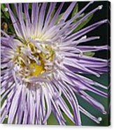 Flower And Spider Acrylic Print