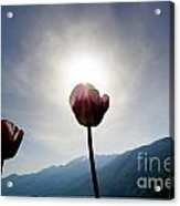Flower And Sun Acrylic Print
