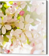 Flower Blossoms Acrylic Print