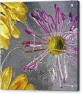 Flower Blossoms Under Ice Acrylic Print