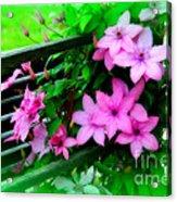 Flower Bouquets Acrylic Print