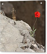 Flower By The Pool Of Bethesda - Israel Acrylic Print