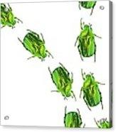 Flower Chafer Beetles Acrylic Print