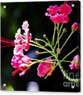 Flower Digital Painting Acrylic Print