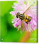 Flower Files On Flower Acrylic Print