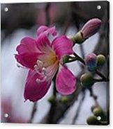 Flower For A Friend Acrylic Print