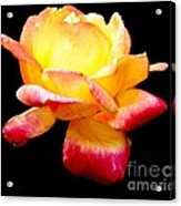 Flower Glow Acrylic Print