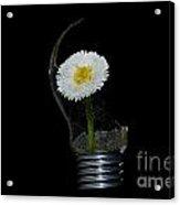 Flower Growing Inside A Lamp Acrylic Print