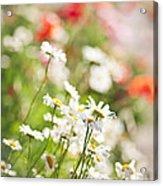 Flower Meadow Acrylic Print by Elena Elisseeva