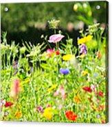 Flower Meadow Acrylic Print