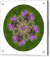 Flower Of Scotland Acrylic Print