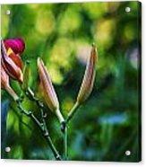 Flower Of Summer Acrylic Print