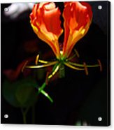 Flower Of The Heart Acrylic Print