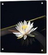 Flower Of The Marsh Acrylic Print