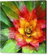 Flower Of The Tropics Acrylic Print