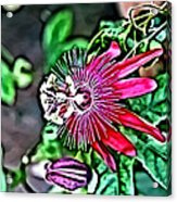 Flower Painting 0001 Acrylic Print by Metro DC Photography