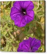 Flower Painting 0006 Acrylic Print