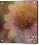 Flower Paper Acrylic Print