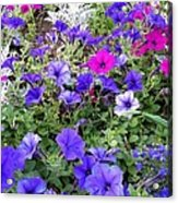 Flower Patch Acrylic Print