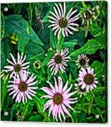 Flower Patterns Acrylic Print