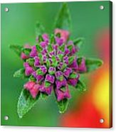 Flower Pop Acrylic Print
