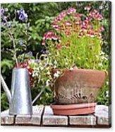 Flower Pot 6 Acrylic Print