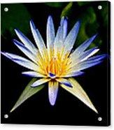 Flower Symmetry Acrylic Print