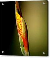 Flowerbud Acrylic Print