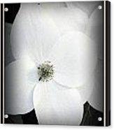 Floweret Acrylic Print