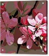 Flowering Crabapple Posterized Acrylic Print