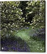 Flowering Trees Amid A Meadow Full Acrylic Print