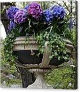 Flowerpot With Hydrangea Acrylic Print