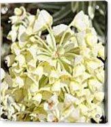 Flowers - 0053 Acrylic Print
