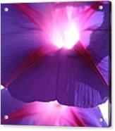 Flowers - Gardening - A Summer Morning Acrylic Print