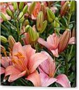 Flowers 385 Acrylic Print