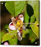 Flowers And Bees Acrylic Print