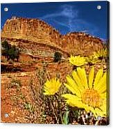 Flowers And Buttes Acrylic Print