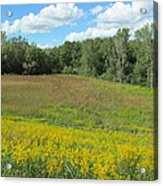 Flowers And Grass Two Acrylic Print