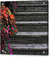 Flowers And Steps Acrylic Print