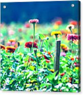 Flowers Everywhere Acrylic Print