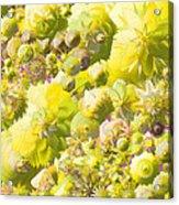 Flowers Flowers Everywhere Acrylic Print