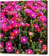 Flowers For Wallpaper Acrylic Print
