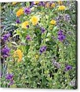 Flowers In Charlottenburg Palace Garden Acrylic Print