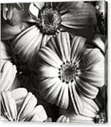 Flowers In Sepia Tone Acrylic Print