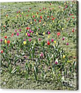 Flowers In Spring Acrylic Print
