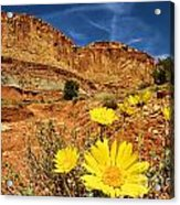 Flowers In The Capitol Acrylic Print