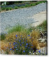 Flowers In The Gold Hill Desert Acrylic Print