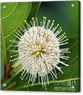Flowers Of The Forest Series Acrylic Print