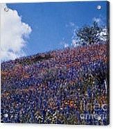 Flowers On A Hill Acrylic Print